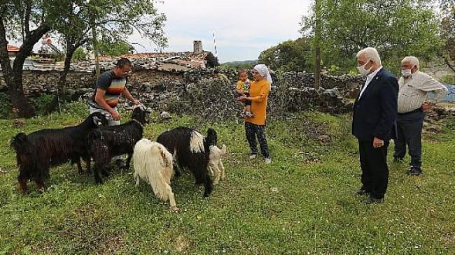 Muğla Büyükşehir Belediyesi 5 İlçede Daha Kadın Üreticilere Kıl Keçisi Desteği Sağlıyor